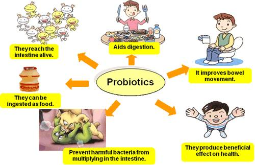 probiotics-aid-degestion